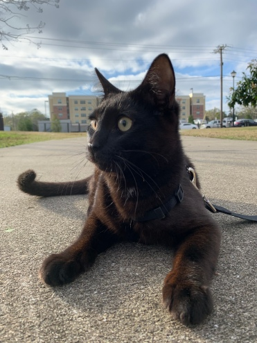 Taking a stroll with my kitty sometimes does the trick!